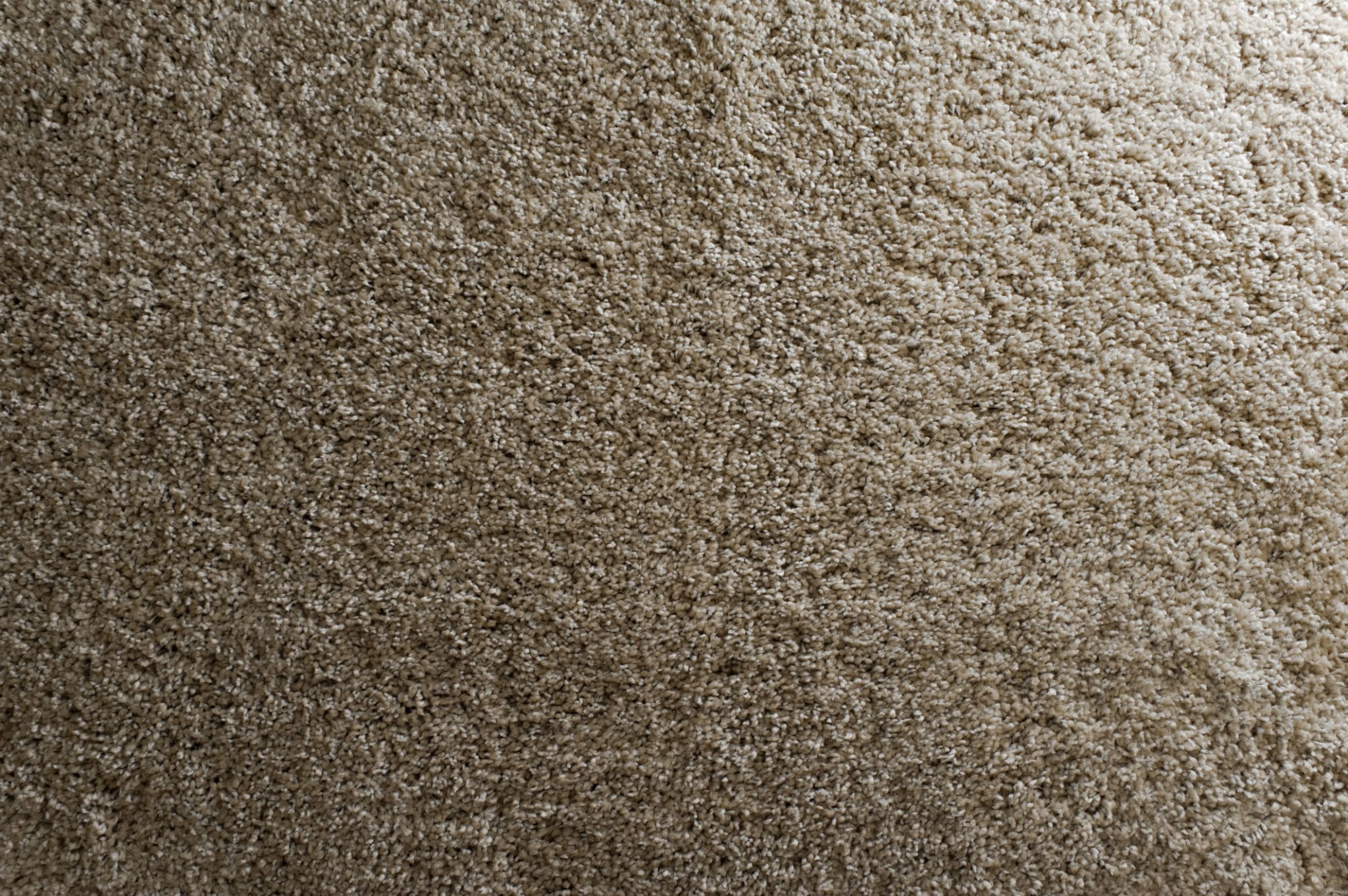 Tan carpet with low loop - Carpet Gallery